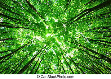 green forest background in a sunny day