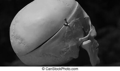 Rotating flashing skull. - Flashing, rotating medical skull....