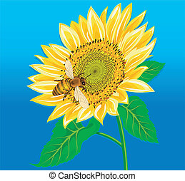 Sunflower - Ideal relationship, bee and a sunflower cannot...