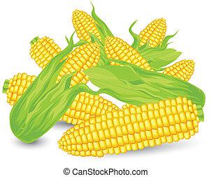 Hill Ears of ripe corn