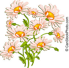 Bouquet of ox-eye daisys on white, summer illustration for...