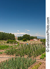 Vegetable garden in France - Vegetable garden with beans in...
