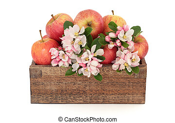 Apple Flower Blossom Beauty