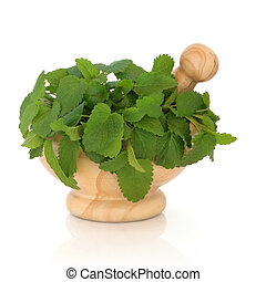 Lemon Balm Herb - Lemon balm herb leaf sprigs in a marble...