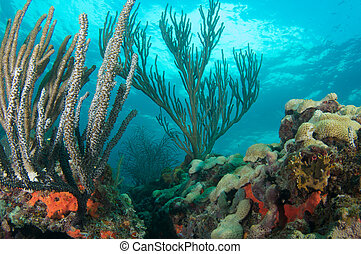 Coral Reef Composition featuring soft corals picture taken...