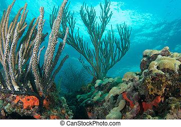 coral, arrecife, composición, Feature, suave,...