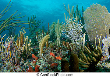 Coral Reef Compostion, picture taken in south east Florida.