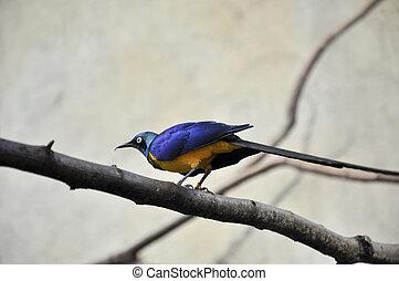 bird a titmouse