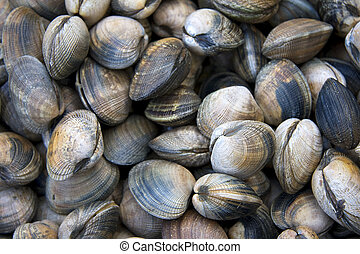 Clam shell background - A background of fresh clams for sale...