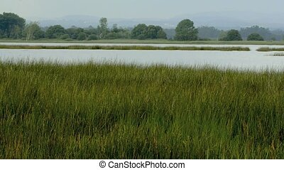 Long grass and water - Long grass on wind and water...