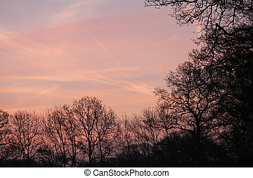 Criss Cross - landscape morning sunrise, pink sky silhouette...