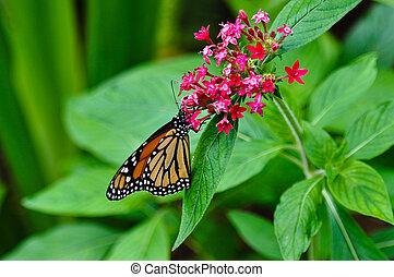 Monarch Butterfly in Rainforest