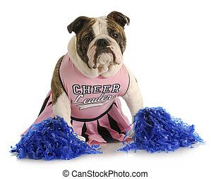 cheerful dog - english bulldog dressed up like a cheerleader...