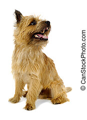 Happy dog - Sweet dog is sitting on a white background. The...