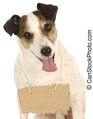 dog with a message - jack russel terrier with a blank sign...