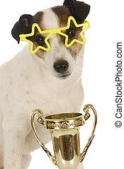 champion dog