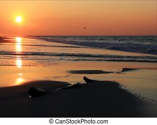 Sunrise Surf SD Loop - Golden-orange light from the recently...