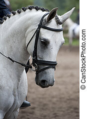 Head of a white horse during practise before the start of a...