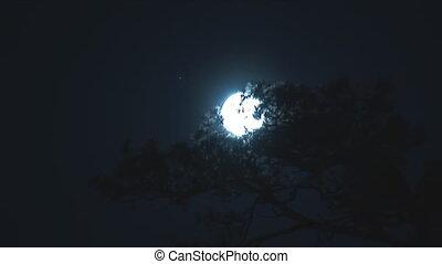 full moon 1 - full moon moves into the night sky