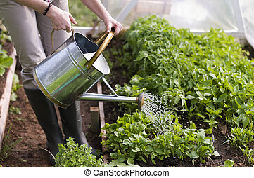 Gardening - Young woman watering plants in glasshouse close...