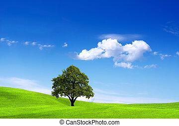 環境, きれいにしなさい