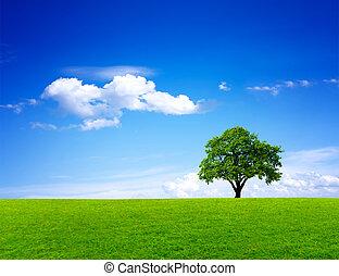 綠色, 自然, 風景