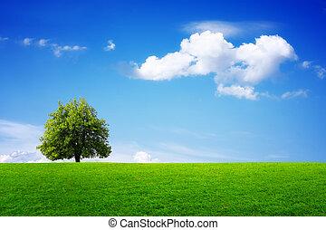Green tree in summer