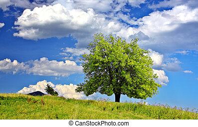 Tree in the mountain