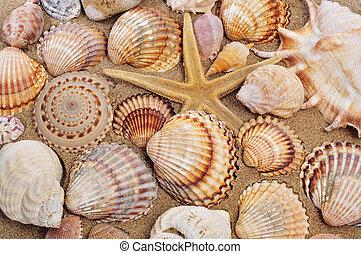 seashells and seastar on the sand of a beach