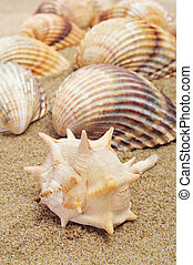 seashells on the sand - some seashells on the sand of a...