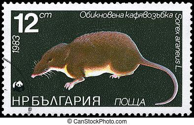 BULGARIA - CIRCA 1983 Shrew - BULGARIA - CIRCA 1983: A Stamp...