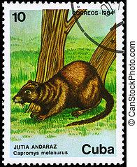 CUBA - CIRCA 1984 Hutia - CUBA - CIRCA 1984: A Stamp printed...