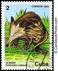 CUBA - CIRCA 1984 Solenodon - CUBA - CIRCA 1984: A Stamp...