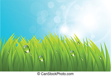 Vector grass background - Vector realistic grass with dew,...