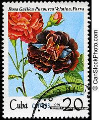 1979,  Cuba, púrpura, rosa,  -, hacia