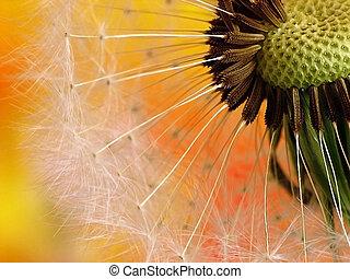 Colourfull dandelion - Dandelion on colourfull background