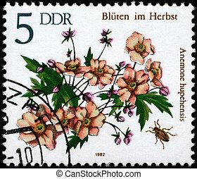 GDR - CIRCA 1982 Anemone - GDR - CIRCA 1982: A Stamp shows...