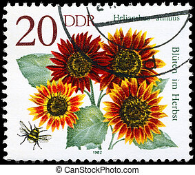 GDR - CIRCA 1982 Sunflower - GDR - CIRCA 1982: A Stamp shows...