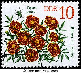 GDR - CIRCA 1982 Marigold - GDR - CIRCA 1982: A Stamp shows...