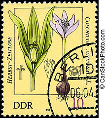 GDR - CIRCA 1982 Colchicum - GDR - CIRCA 1982: A Stamp shows...