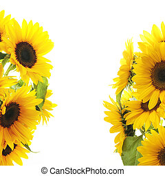 Sunflower Frame  - On white background
