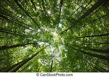 spring forest treetops (intentionally distorted image; shot...