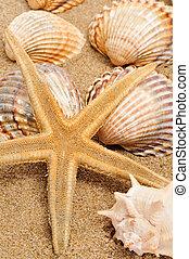 seashells and seastar on the sand