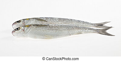 Two fish on white background - Two fish