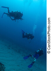 Scuba Divers swimming over a sandy bottom in south east...