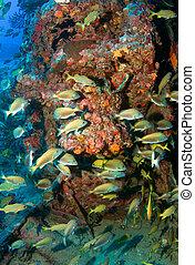 vertical, composición, pez, aggregation, artificial,...