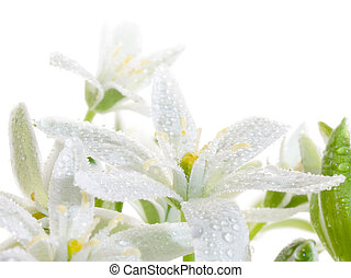 Flowers - White flowers isolated on white background