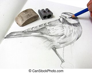 drawing a bird with pencil - drawing portrait of a bird...