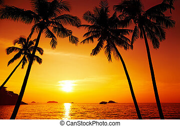Palm trees silhouette at sunset, Chang island, Thailand