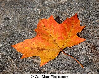 Leaf on asphalt in fall